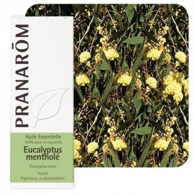 Eucalyptus mentholé 10ml