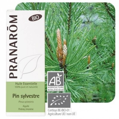 Pin sylvestre 10ml