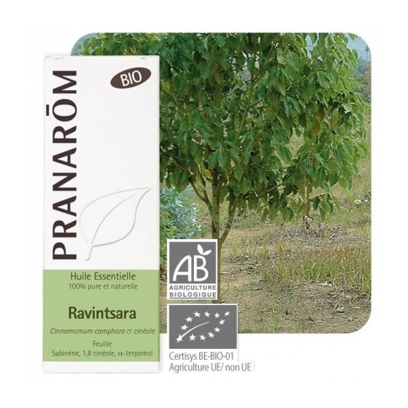 Huile essentielle ravintsara pranarom - Sinusite huile essentielle ravintsara ...