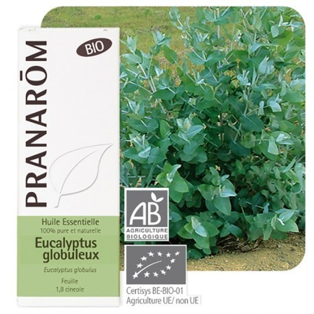 Eucalyptus globulus 10ml