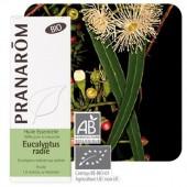 Eucalyptus radiata 10ml