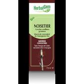 Noisetier Herbalgem