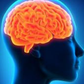 Cerveau - mémoire