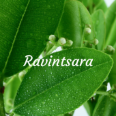 Ravintsara